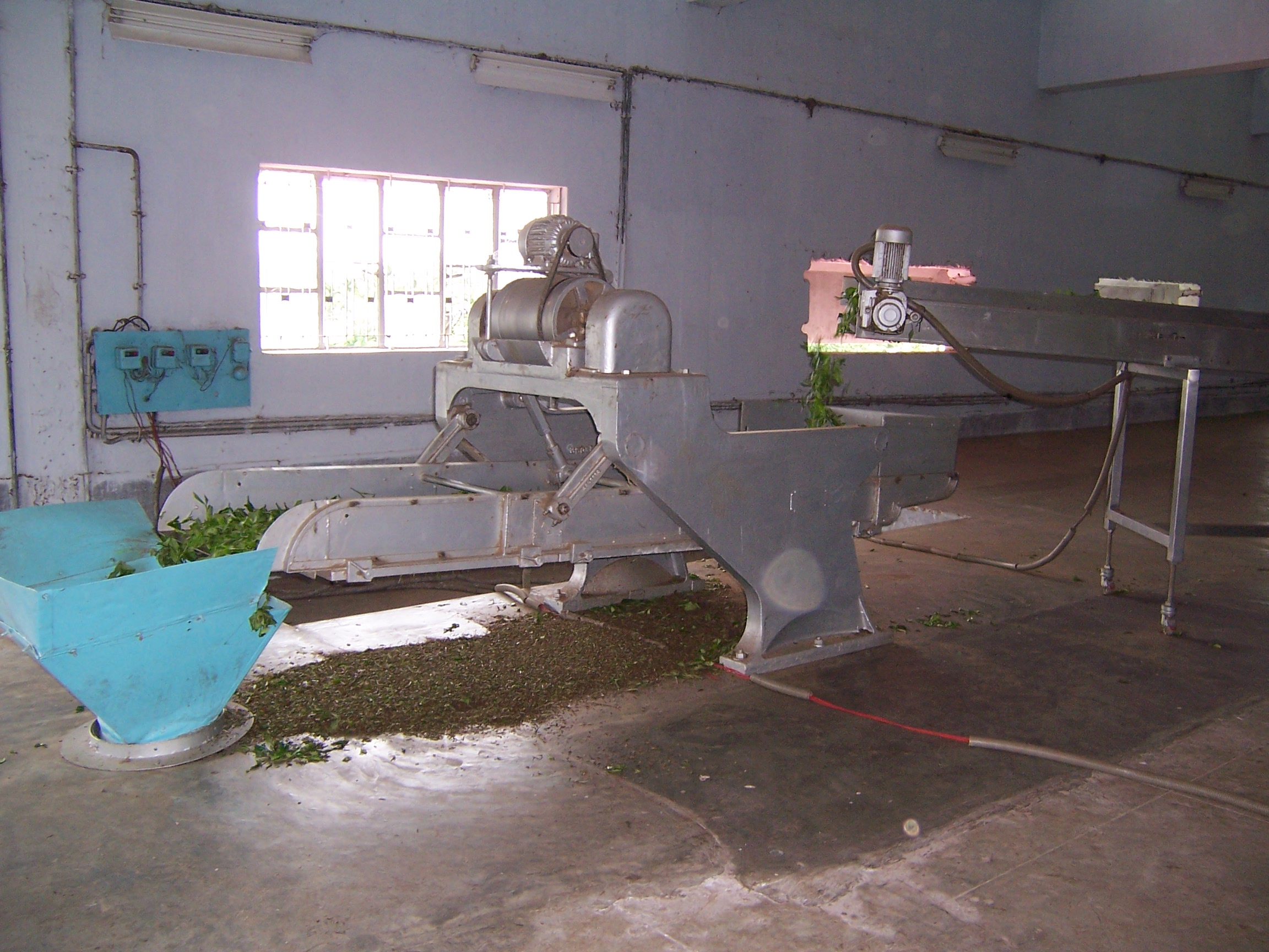 A machine used in the process of turning tea leaves into tea