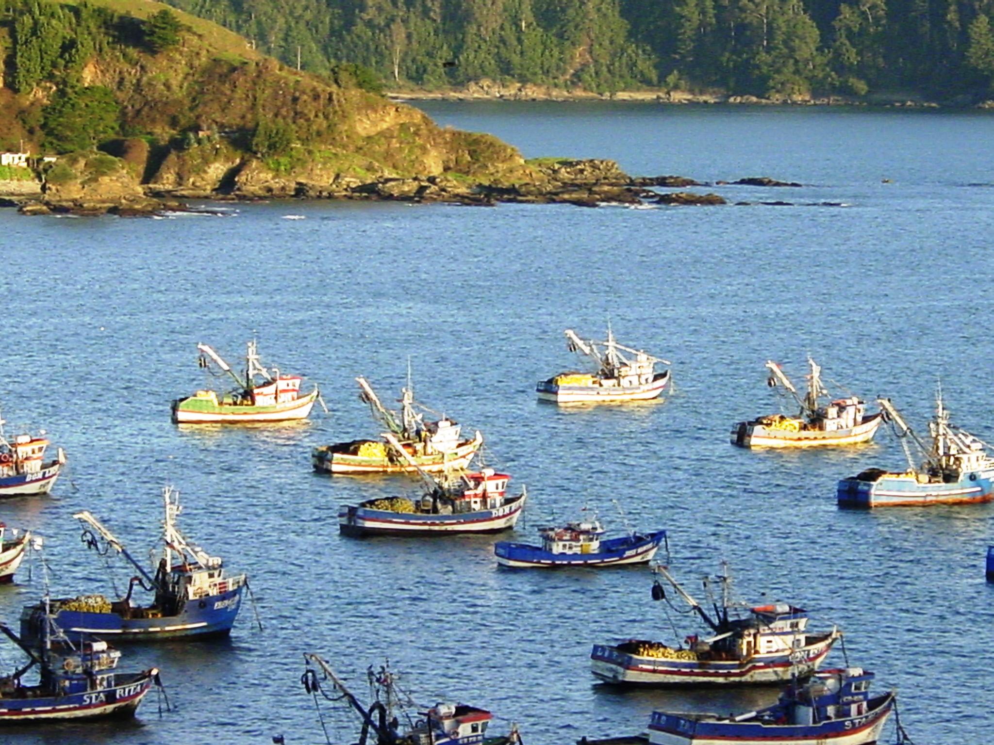 Fishing boats in Lota