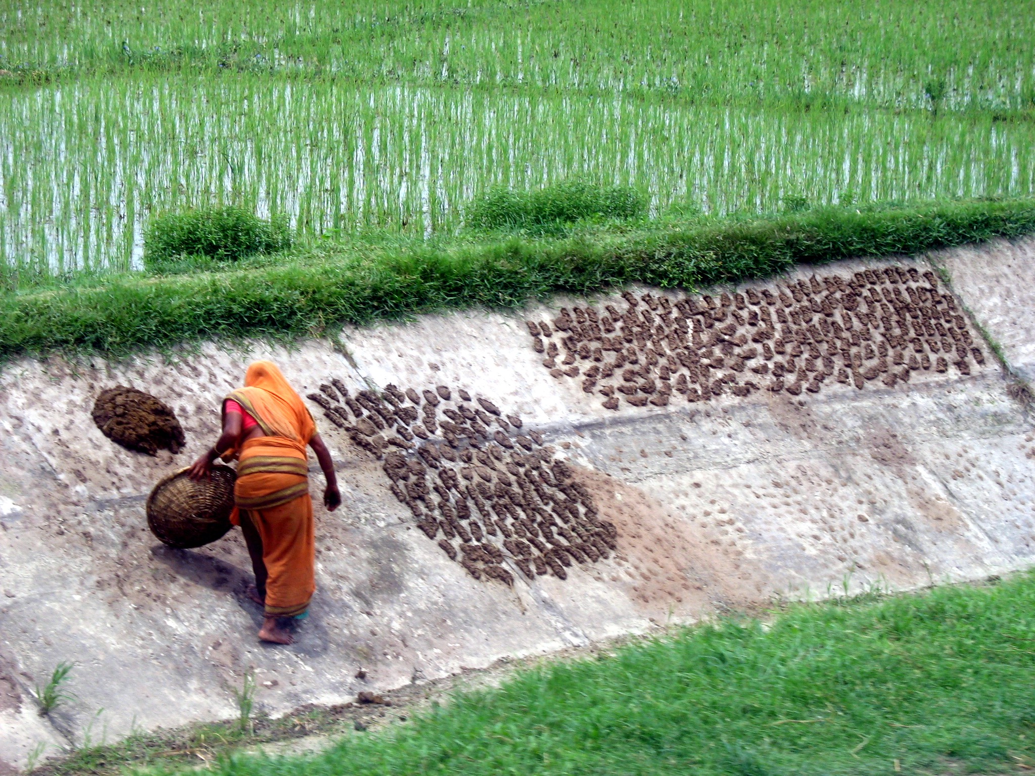 A woman at work in the fields