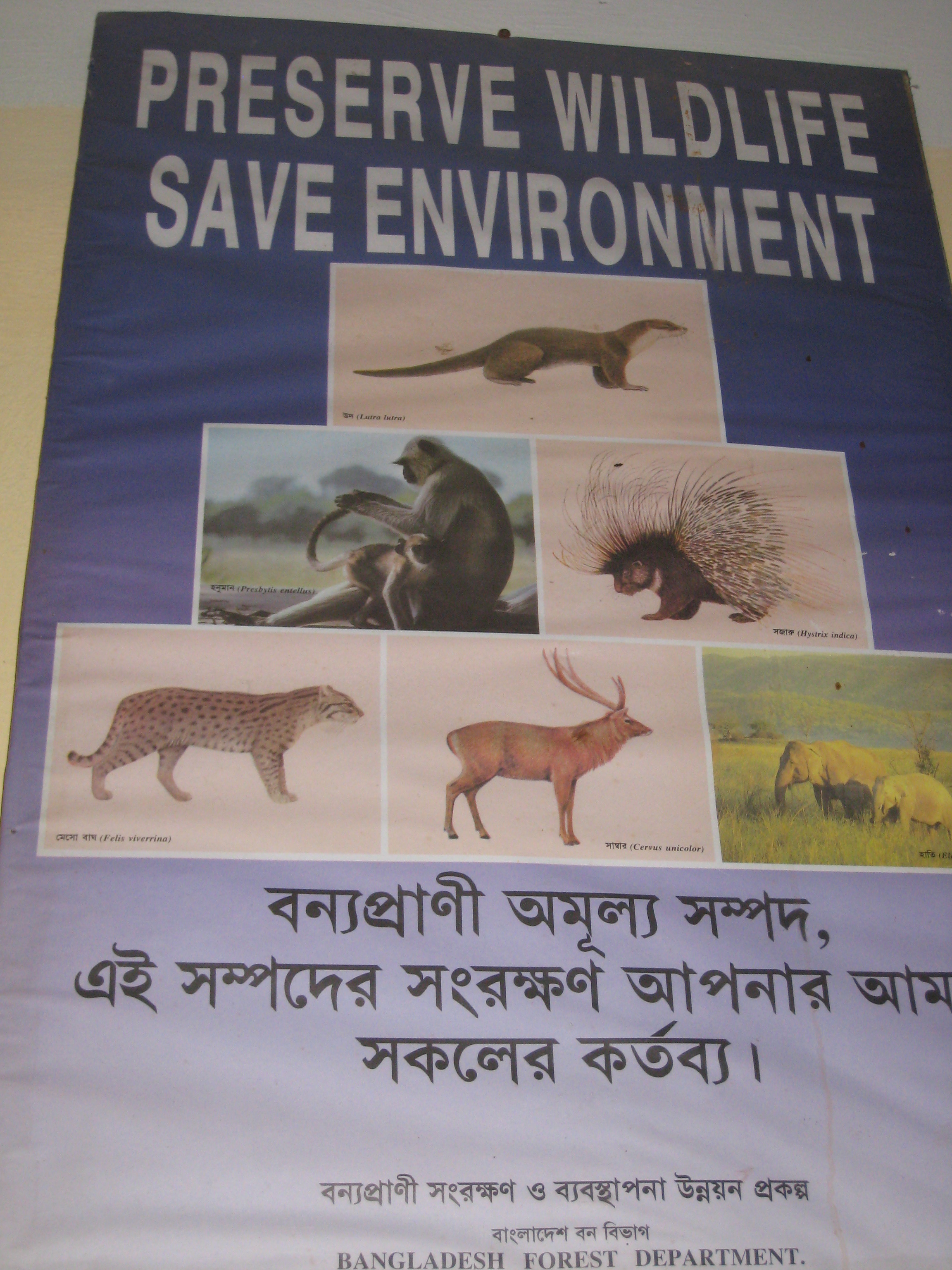 A wildlife preservation poster