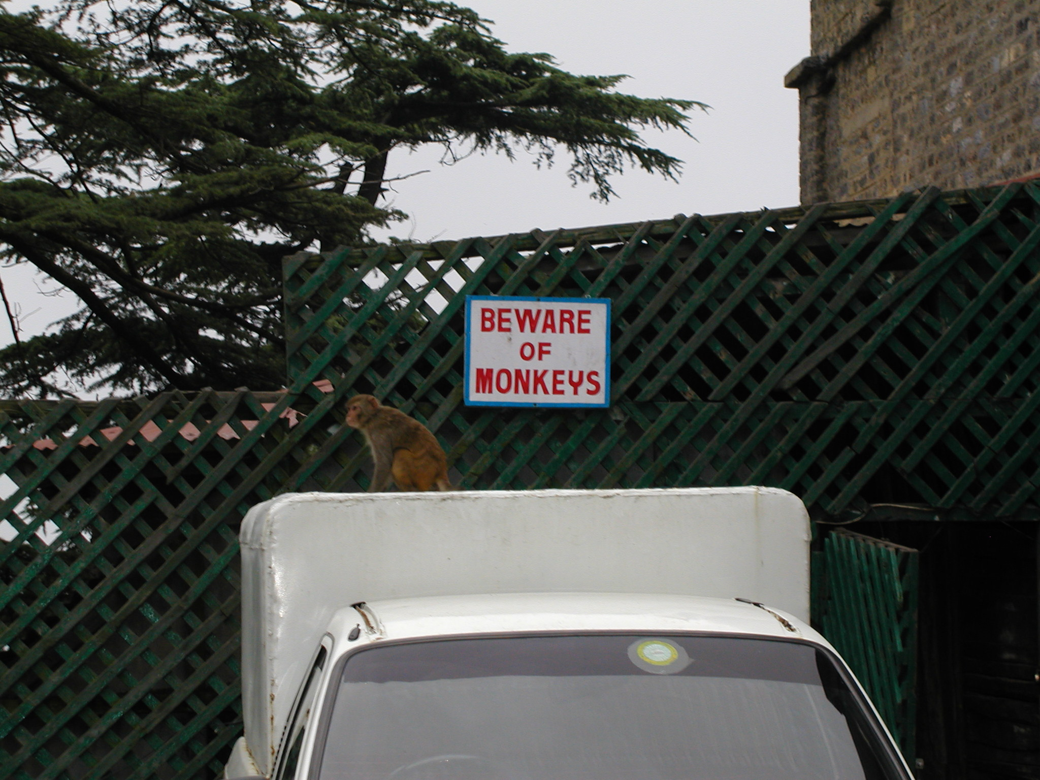 Beware of monkeys sign